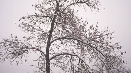 winter christmas park. Snow falls on leafless tree branches in slow motion. beautiful winter landscape. snow lies on tree branches.