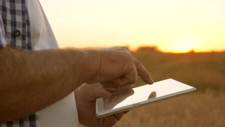hands of a farmer with a tablet. close-up. businessman with a tablet evaluates a grain harvest. Farmer with a tablet works in a wheat field. Harvesting cereals. business man checks quality of grain.