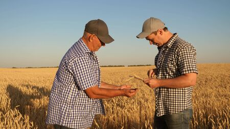 Businessmen take pictures of millet on a tablet and send it to the manufacturer s website. An agronomist and a farmer work in a field checking wheat grain for quality. Harvesting cereals