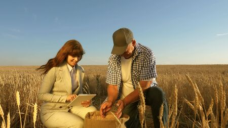 business woman and farmers teamwork in field. agronomist and farmer are holding a grain of wheat in their hands. Harvesting cereals. Businesswoman checks quality of grain. Agriculture concept.