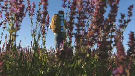 Young male traveler goes uphill in a field with beautiful flowers. Travel and adventure concept. a tourist travels in nature, with a backpack climbs a hill. healthy lifestyle concept