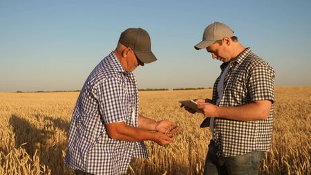 businessman and farmer with tablet working as a team in the field. agronomist and farmer are holding a grain of wheat in their hands. Harvesting cereals. A business man checks the quality of grain. Zdjęcie Seryjne
