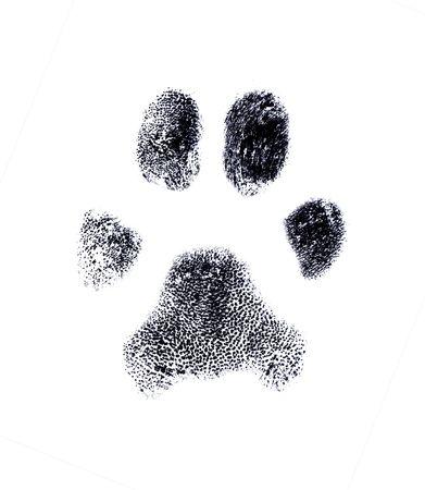 Dog fingerprint from my own pet Stock Photo