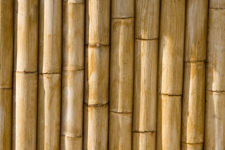 Bamboo cane texture