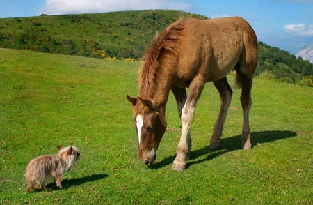 david brown: A very small blond yorkie versus a few months horse in the mountains of Asturias, Spain. A very untypical picture.