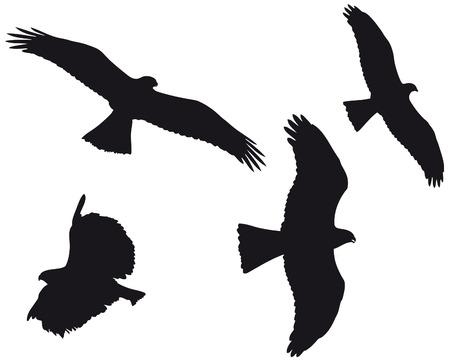 halcón: Cuatro águilas sihouette en negro.  Vectores