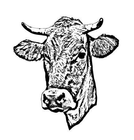 Silhouette of a cows head.