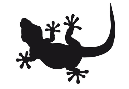 Lizard silhouette isolated against white Illustration