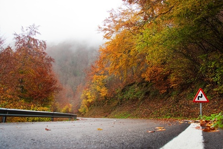 road autumnal: Autumnal atmosphere on a road with a sign indicating a curve.