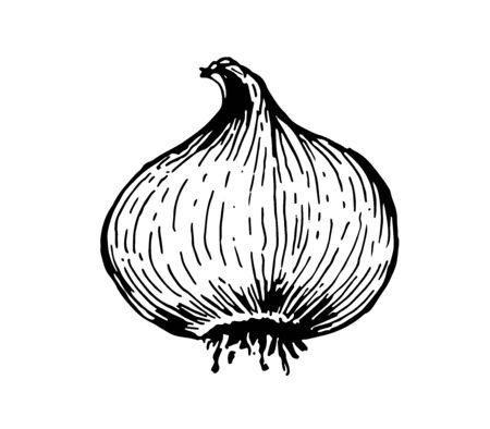 Onion head Çizim