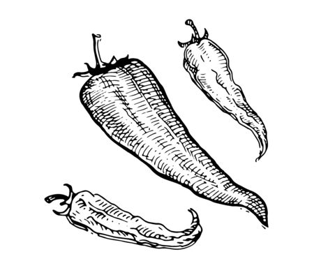 Chili peppers, Hot and burning. Drawing graphics, black and white vector graphics