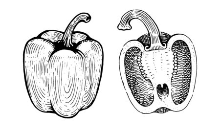 Bell Peppers, paprika, whole and half. Drawing graphics, black and white vector graphics Фото со стока - 127740285