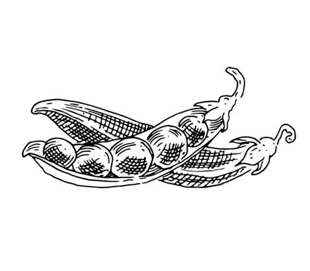 Green peas, pods, black and white graphics, drawing made by hand