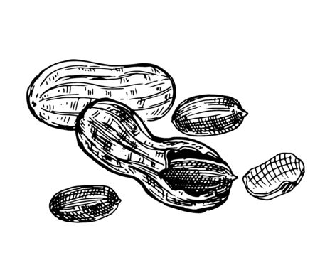 Peanut, whole nut, shell and kernel of a nut