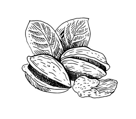 Pistachios nut, whole nut, shell and kernel of a nut