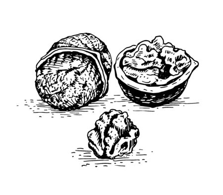 Walnut, whole nut, shell and kernel of a nut. Black and white graphics, drawing made by hand