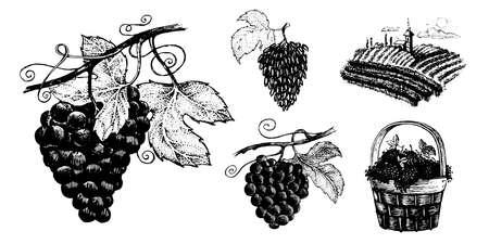 Grapes, vector set of images. Vector graphics for labels, menus or packaging design. Иллюстрация