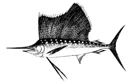 Marlin, Fish collection. Healthy lifestyle, delicious food. Hand-drawn images, black and white graphics.