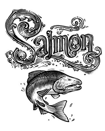 Salmon, vector logo and illustration. Vintage graphics and handwork. Drawing with an ink pen and pencil. The salmon jumps out of the water and a vintage logo. A collection of beautiful logo and words. Logo