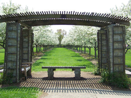 renewal: grove in spring