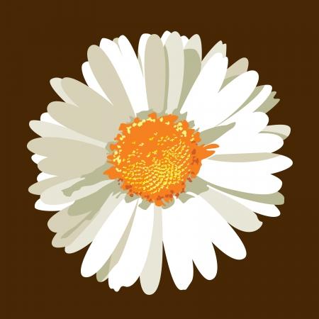 Daisy Flower  Vector Illustration