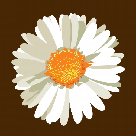 Daisy Flower  Vector Illustration Stock fotó - 14371974