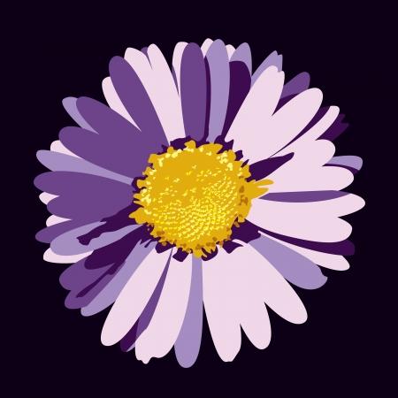 Daisy Flower  Illustration  Ilustrace