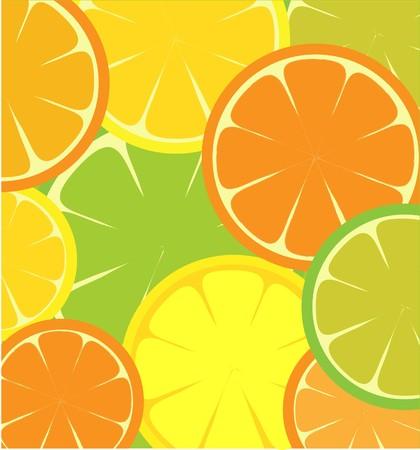 sliced Grapefruit, lemon, lime and orange, template design Vector