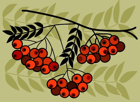 verdant: tree branch with red fruits on green background