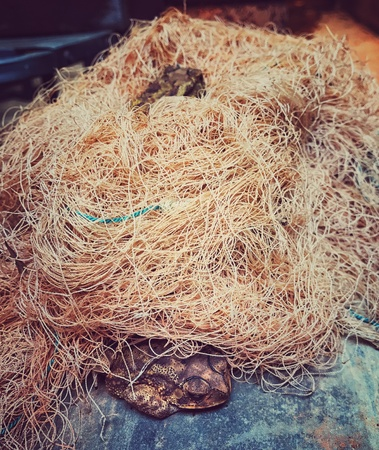 net: Frogs sleeping in a fishing net Stock Photo