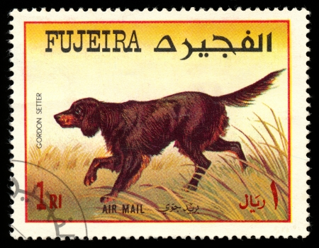 FUJEIRA - CIRCA 1980: Timbre imprimé en montrant Fujeira chiens setters Gordon, vers 1980