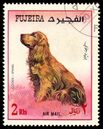 fujeira: FUJEIRA - CIRCA 1980: Postage stamp printed in Fujeira showing dog cocker spaniel, circa 1980