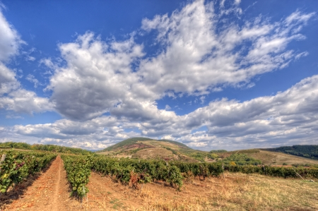 View of a wineyard in autumn with clouds photo