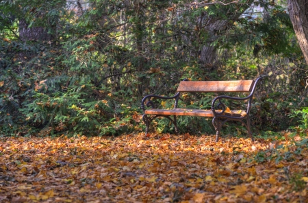Colourful park with bench in fall photo