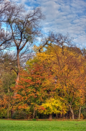 Colorful arboretum in the fall photo