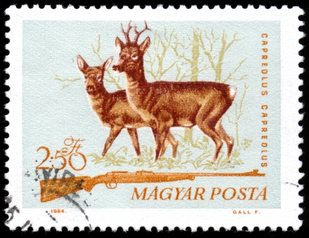 roe deer: HUNGARY - CIRCA 1964  A stamp printed in Hungary from the  Hunting  issue shows image of a roe deer and hunting rifle, circa 1964