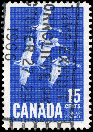 CANADA - CIRCA 1963  A stamp printed in Canada, shows Canada Geese, circa 1963