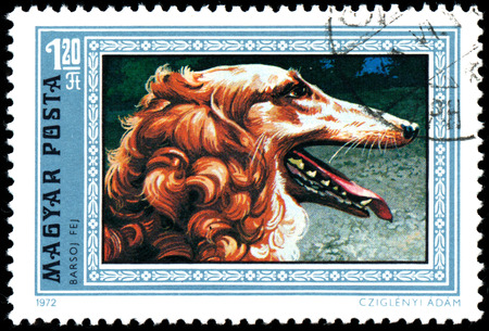 HUNGARY - CIRCA 1972: Postage stamp printed in Hungary showing Greyhound, circa 1972.