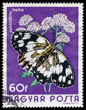 circa: HUNGARY - CIRCA 1974  A Stamp printed in Hungary shows butterfly Marbled White - Melanargia galathea, circa 1974  Stock Photo