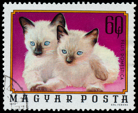 familiaris: HUNGARY - CIRCA 1974  A stamp printed in Hungary from the  Young animals  issue shows two Siamese kittens, circa 1974