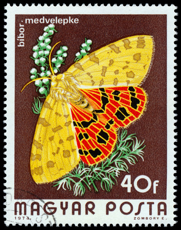 woolly: HUNGARY - CIRCA 1974  A Stamp printed in Hungary shows butterfly woolly bears - Arctiidae, circa 1974