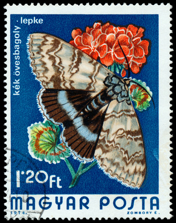 catocala: HUNGARY - CIRCA 1974  A Stamp printed in Hungary shows butterfly Blue Underwing - Catocala fraxini, circa 1974