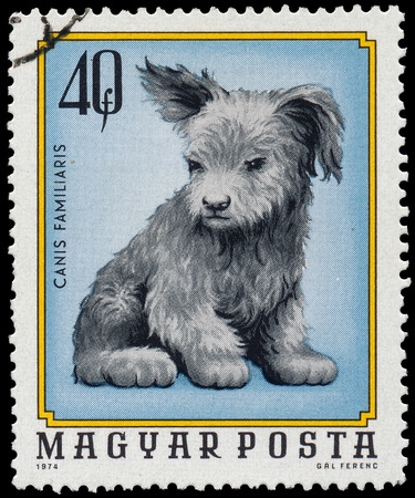 familiaris: HUNGARY - CIRCA 1974  A stamp printed in Hungary shows image of a dog  Canis familiaris , circa 1974  Stock Photo