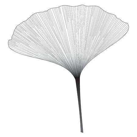 Botanical series Elegant Single Ginkgo leaf in sketch style in black and white on white background Vector Illustration