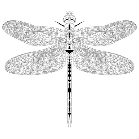 Elegant  dragonfly insect detailed sketch in black and white