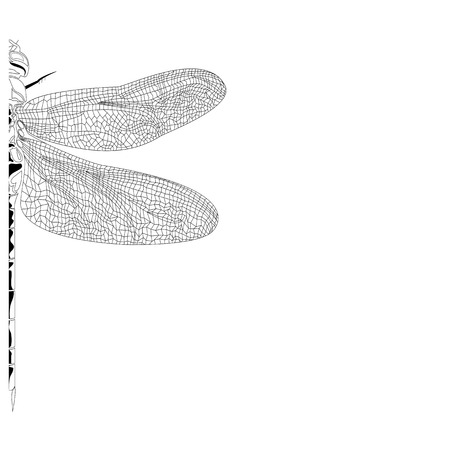 Elegant , partial  dragonfly insect detailed sketch in black and white