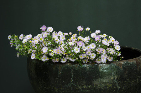 Daisies in pottery