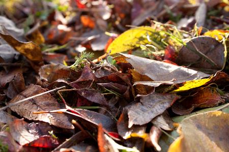 autumn leaves falling: autumn leaves falling on natural background Stock Photo
