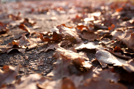 chromatic colour: A ray of sunlight on the fallen autumn leaves