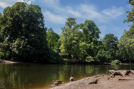 Beautiful natural landscape with cute ducks enjoying on the lake Stock Photo